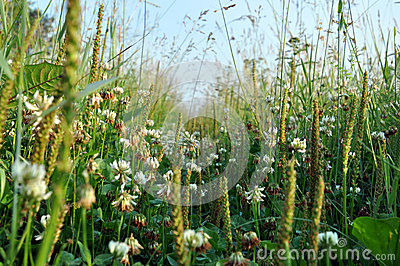 Shamrock, Green Grass Royalty Free Stock Images - Image: 27488729
