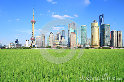 Shanghai Lujiazui city of field landscape