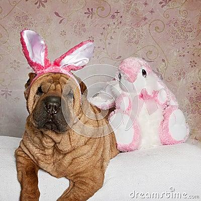Shar Pei Easter Portrait