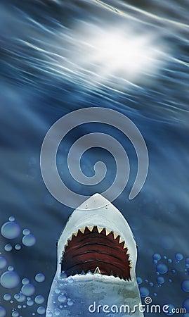 Free Shark Stock Photo - 7578570