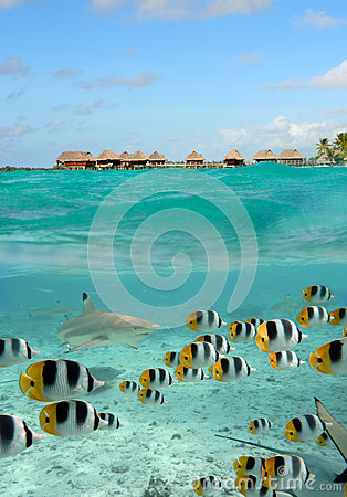 Free Shark And Butterfly Fish At Bora Bora Stock Photo - 25913630