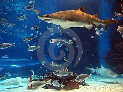 Shark in aquarium