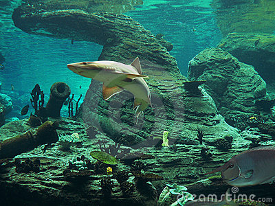 Shark - aquarium