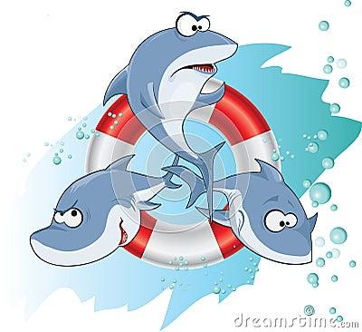 Shark band