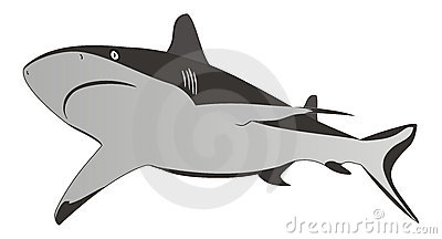Shark - dangerous sea predator,vector illustration