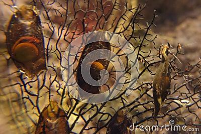 Shark eggs