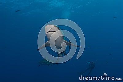 Shark interaction
