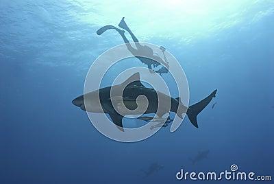 Shark investigation