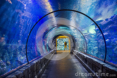 Shark reef Editorial Stock Image