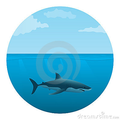 Shark in the sea
