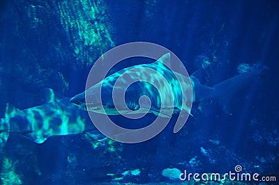Shark spotting #3
