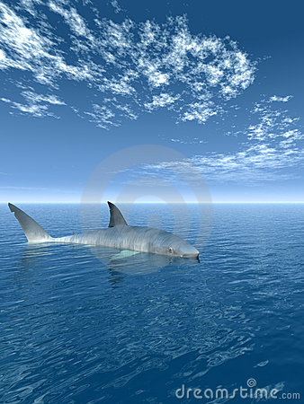 Shark_V