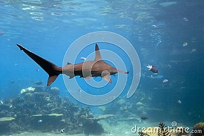 Sharkh stock photography image 4994902 for Shark tank fairy door