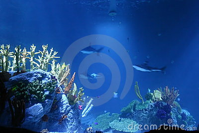 Sharks and coral