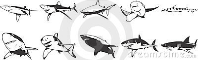 Sharks icons