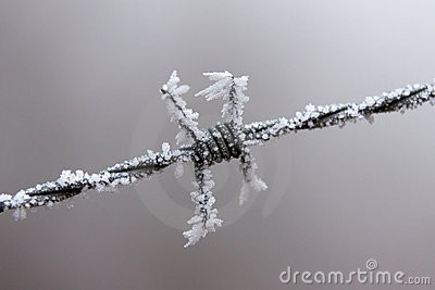 A Sharp Frosted Barbed Wire