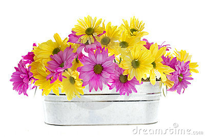 Shasta Daisy Flowers in Silver Container