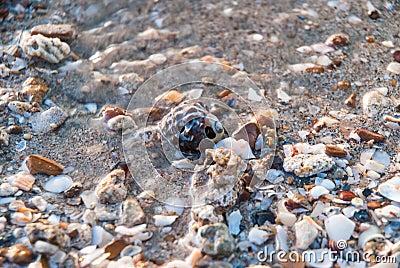 Shattered seashells