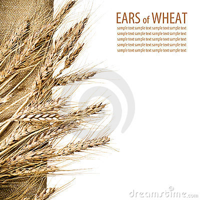 Sheaf of ears of wheat on linen fabric