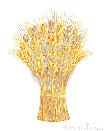 Free Sheaf Of Wheat Ears Royalty Free Stock Photos - 26199398