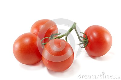 Sheaf of ripe tomatoes