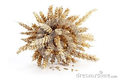 Sheaf of ripe wheat