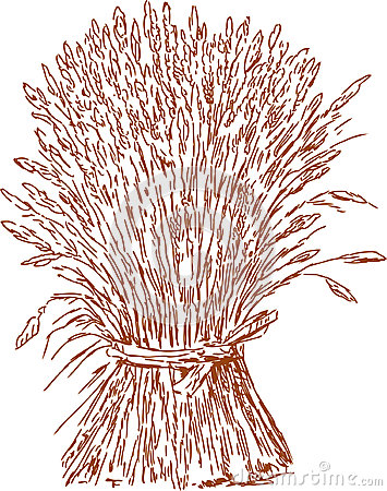 Sheaf Of Wheat Royalty Free Stock Image - Image: 29517856
