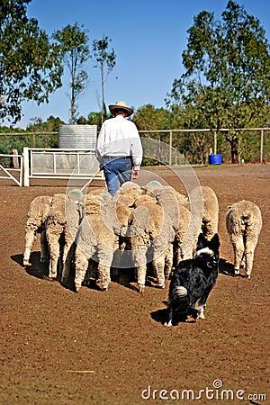 Free Sheep Stock Image - 3832011