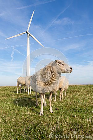 Free Sheep At A Dike Along A Row Of Wind Turbines Royalty Free Stock Image - 32772216