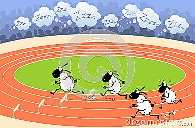 Sheep athletics