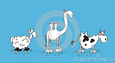 Sheep, Camel and Cow