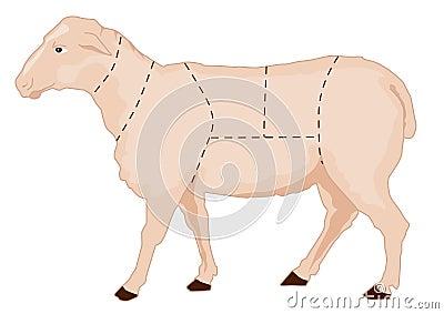 Sheep chart