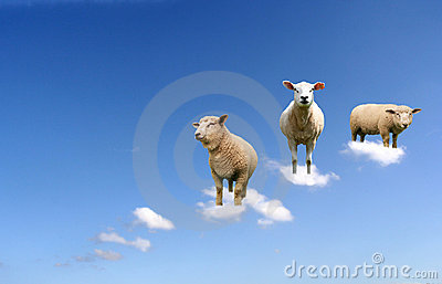 Sheep on clouds