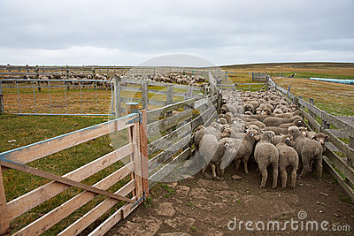 Sheep Corral In Iceland Stock Image - Image: 17875731