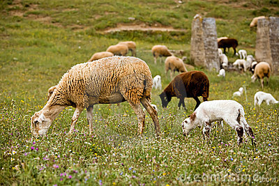 A sheep with cute little lambs on meadow