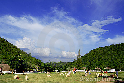 Sheep farms In the mountains