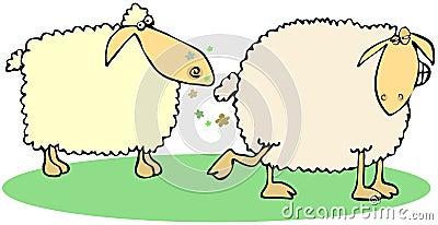 Sheep farts