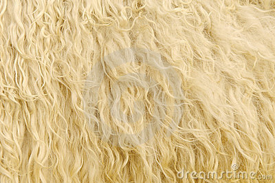 Sheep Fur Background