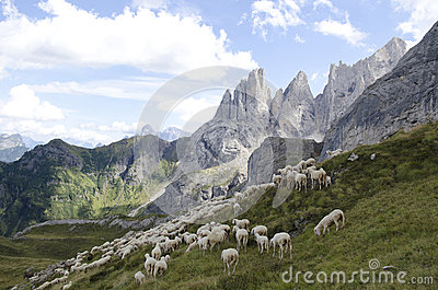 Sheep grazing in mountain