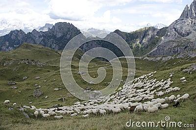 Sheep grazing in mountain
