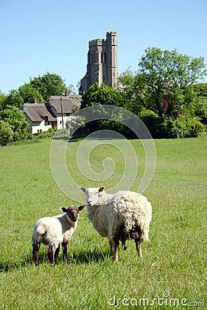 Sheep and Lamb in pastoral set