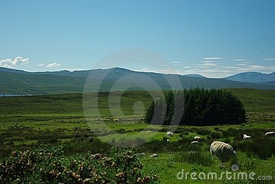 Sheep on landscape
