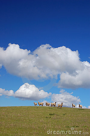 Free Sheep On A Hillside Royalty Free Stock Photo - 577425