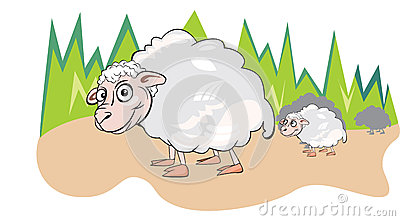 Sheep or Ovis aries, illustration