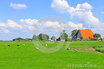 Sheep and poultry grazing in a meadow