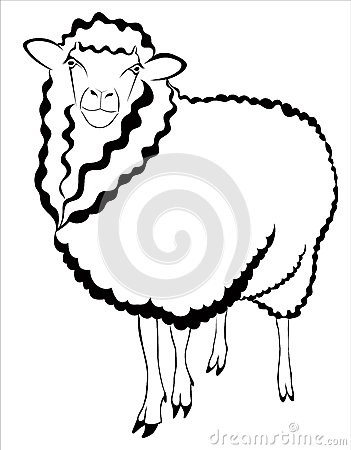 Sheep ram lamb