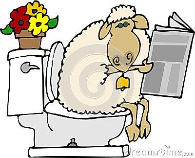 Sheep shit
