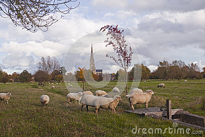 Sheep and spire
