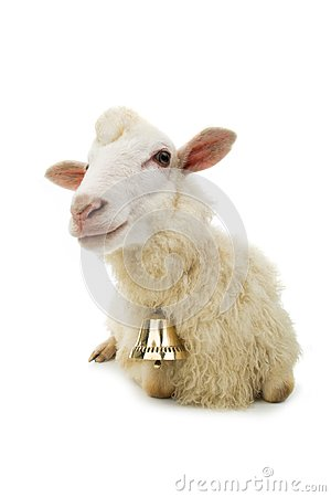 Free Sheep With Bell Stock Photos - 117456323
