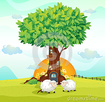 Sheeps under tree house